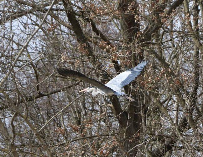 Fischreier Brandenburg Urlaub an der Seenplatte
