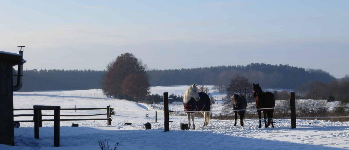 Kleinzerlang Winter Pferde